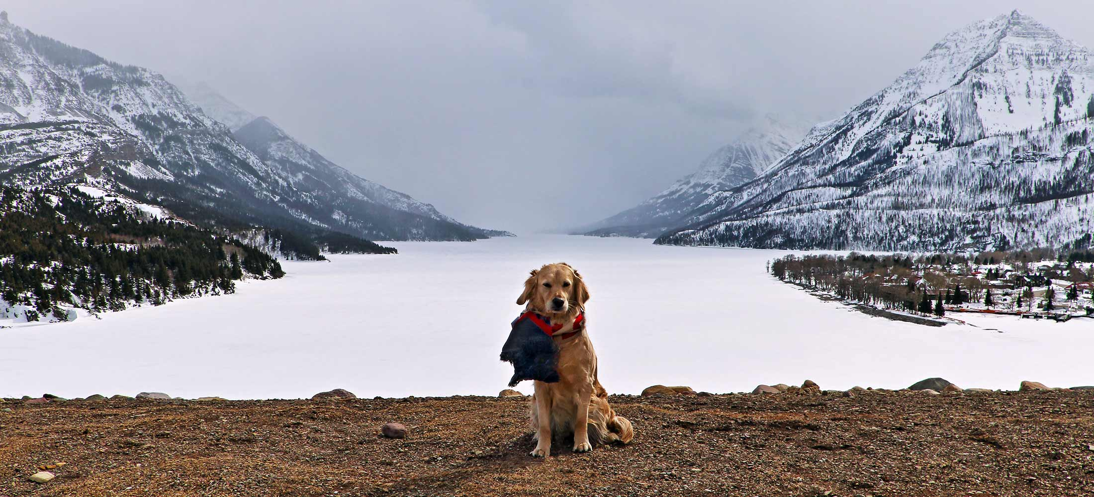 The goodest pupper poses for beautiful mountain photo in Waterton Lakes National Park